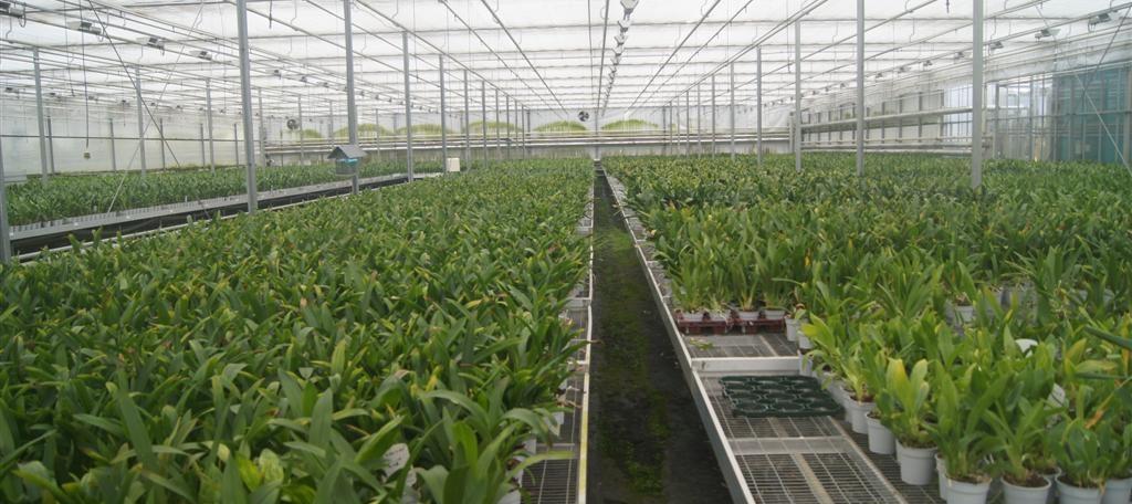Circulaire watervoorziening tuinbouw: Water in de kas
