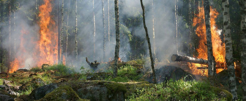 Water en Vuur: hydrologische voorspellingen voor de beheersing van natuurbranden