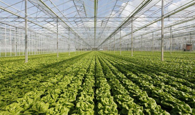 Water in de tuinbouw: veel kansen, maar lange adem noodzakelijk
