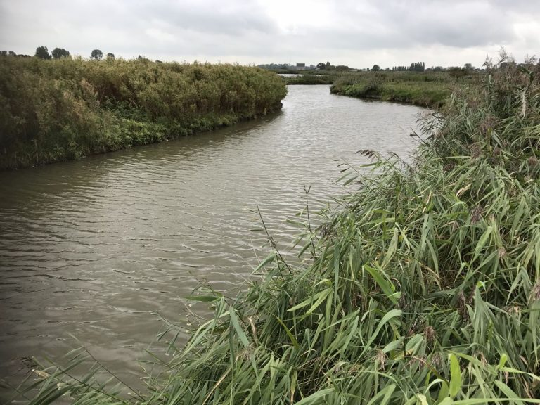 Verwijdering van toxisch selenium uit (afval) water op een milieuvriendelijke manier