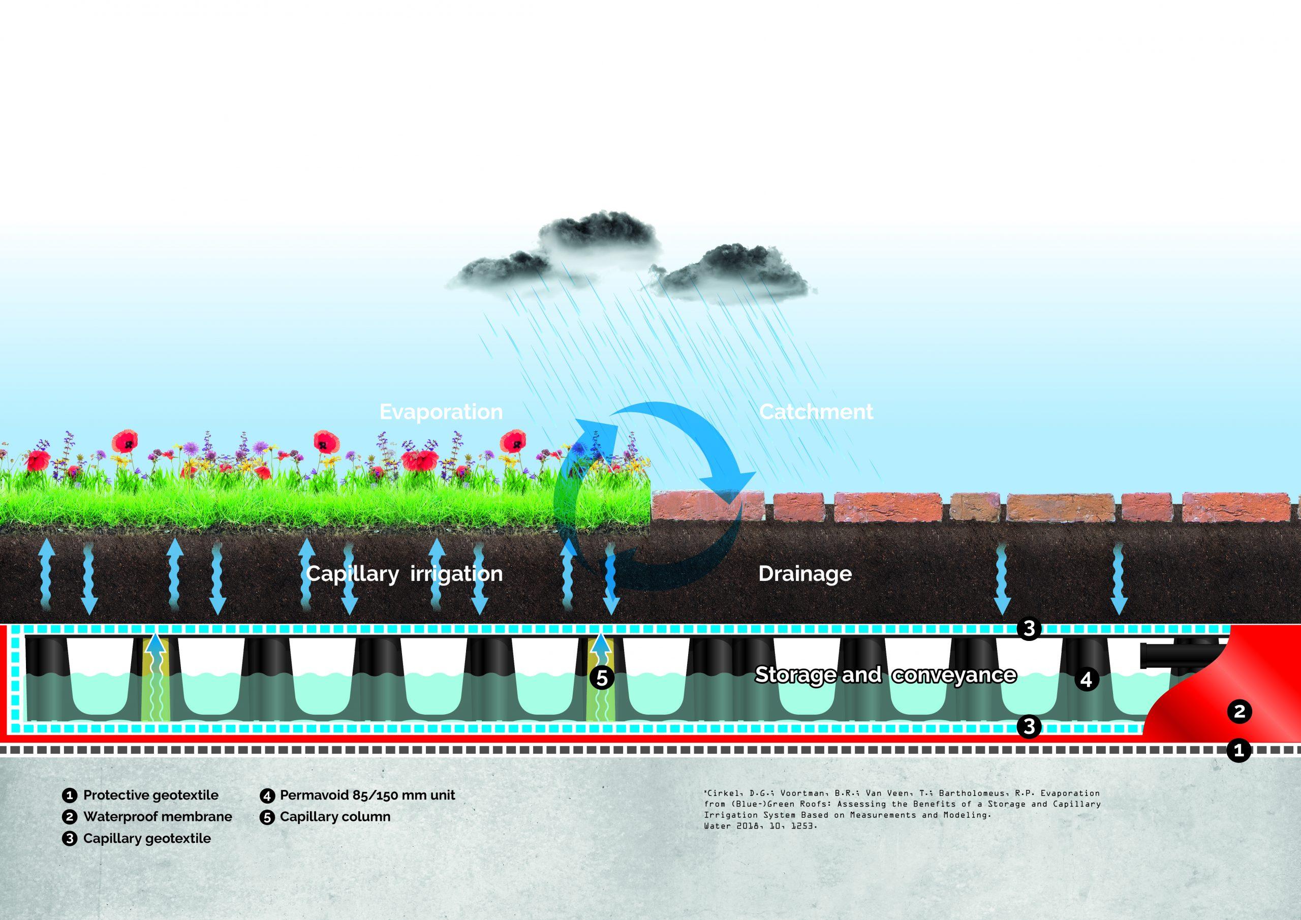 Schematisch overzicht van de opbouw en werking van het blauwgroene dak, ontwikkeld door Drain Products Europe BV en getest in het Smartroof 2.0-project.